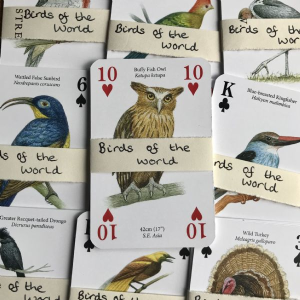 Birds  Of the World - 5 Playing Cards